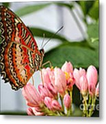 Just Pink Butterfly Metal Print
