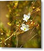 Just Two Little White Flowers Metal Print