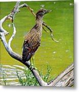 Juvenile Black-crowned Night Heron  Metal Print