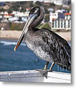 Juvenile Brown Pelican Metal Print