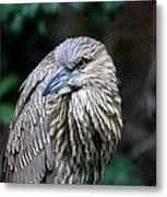 Juvenile Heron Metal Print