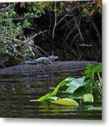 Juvie Gator Metal Print