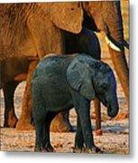Kalahari Elephants Metal Print