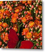 Kalanchoe Plant With Butterfly Metal Print