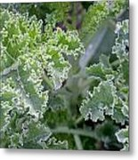 Kale Interior Metal Print