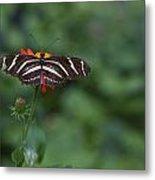 Kanapaha Butterfly I Metal Print