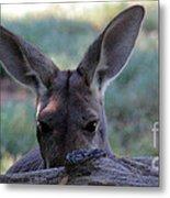Kangaroo-4 Metal Print