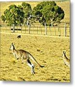Kangaroo Hop Metal Print