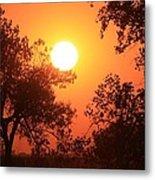 Kansas Golden Sunset With Trees Metal Print by Robert D  Brozek