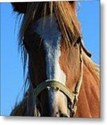 Kansas Horse Potrait Red And White Metal Print