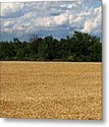 Kansas Wheat Field 5a Metal Print