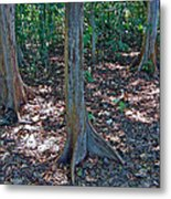 Kapok Trees Along The Trail In Manual Antonio National Preserve-costa Rica Metal Print