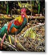 Kauai Rooster Metal Print