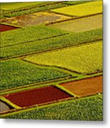 Kauai Taro Fields Metal Print