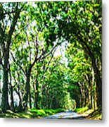 Kauai Trees Metal Print