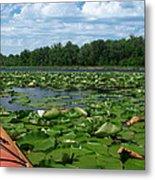 Kayaking Among The Waterlillies Metal Print