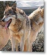 Keeping Watch - Pair Of Wolves Metal Print