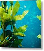 Kelp One Metal Print