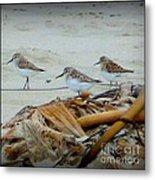 Kelp Standing Visitors Metal Print