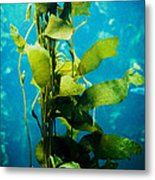 Kelp Two Metal Print