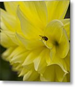 Kelvin Floodlight Dahlia Metal Print