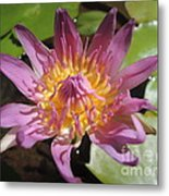 Kerala Flower Metal Print