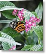 Key West Butterfly Conservatory - Monarch Danaus Plexippus 2 Metal Print