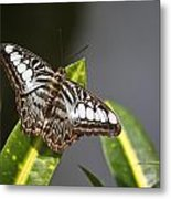 Key West Butterfly Conservatory - In Brown And White Metal Print