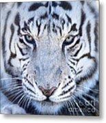 Khan The White Bengal Tiger Metal Print