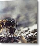 Killer Bee Metal Print