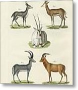 Kinds Of Antilopes Metal Print