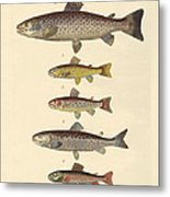 Kinds Of Trouts Metal Print