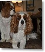 King Charles Dogs Metal Print