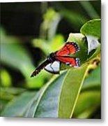 King Of The Butterflies Metal Print
