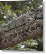 King Of The Rain Forest Metal Print