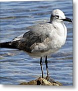 King Of The Rock Seagull Metal Print