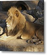King Of The Rock Metal Print