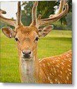 King Of The Spotted Deers Metal Print