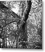 King Of The Timber Bw Metal Print