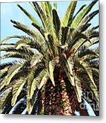 King Palm Metal Print