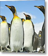 King Penguins Looking Metal Print