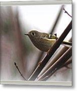 King - Ruby Crowned Kinglet - Bird Metal Print