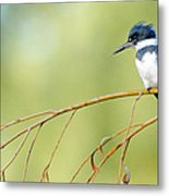 Kingfisher On A Willow Metal Print