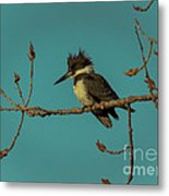 Kingfisher On Limb Metal Print
