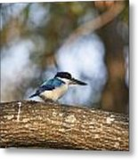 Kingfisher-top-end Australia Metal Print