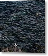 Seagulls At Cliffs Ready To Fish In Mediterranean Sea - Kings Of The World Metal Print