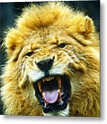 Kings Roar Metal Print