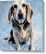 Kippy Beagle Senior And Best Dog Ever Metal Print