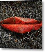Kiss Of Leaf Metal Print