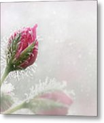 Kissed With Dew Metal Print
